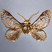 Vansoniella chirindensis gen. n., sp. ...