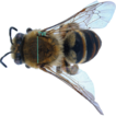 Morphology, pollen preferences and DNA-barcoding ...