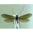 Records and descriptions of caddisflies ...