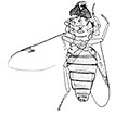 On the enigmatic <i>Sinonemestrius</i> Hong &amp; Wang, 1990, with description of a new species based on a complete fossil fly (Diptera, Brachycera, Tabanomorpha, Heterostomidae)