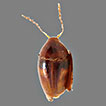 A review of the genus <i>Xotidium</i> Löbl, 1992 (Coleoptera, Staphylinidae, Scaphidiinae), with descriptions of five new species